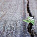 Veerkracht in tijden van onzekerheid